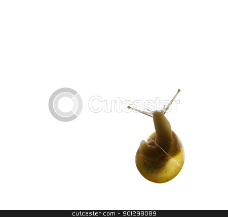 Snail Silhouette stock photo, Snail silhouette from the underside with copy space by Tyler Olson