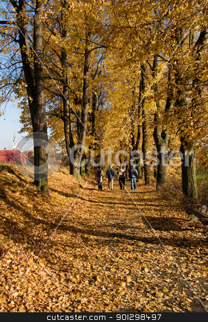 Fall Path Walk stock photo, Walking along a path in fall by Tyler Olson