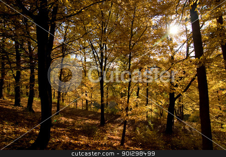 Golden Forest stock photo, A golden forest in the fall by Tyler Olson