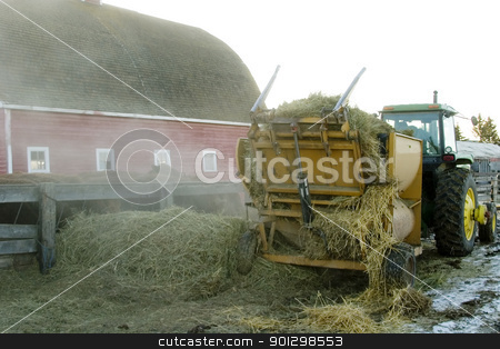 Feeding Cattle stock photo, Feeding cattle with a bulk hay spreader. by Tyler Olson