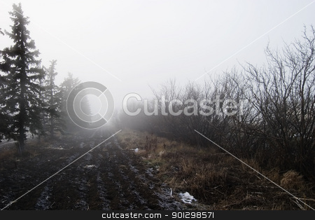Foggy Tree Row stock photo, Row of trees in the fog. by Tyler Olson