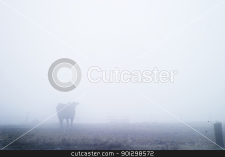 Cow in Fog stock photo, Cow in the fog by Tyler Olson