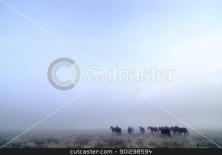 Prairie Horses stock photo, Horses on a foggy day in winter, on the prairie. by Tyler Olson