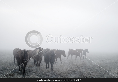 Prairie Horses stock photo, Horses on a foggy day in winter, on the prairie. by Tyler Olson