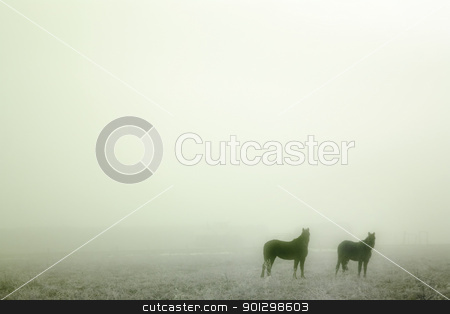 Prairie Horses stock photo, Horses in the mist by Tyler Olson