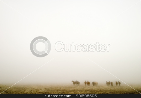 Prairie Fog stock photo, Horses on a foggy day on the saskatchewan prairie. by Tyler Olson