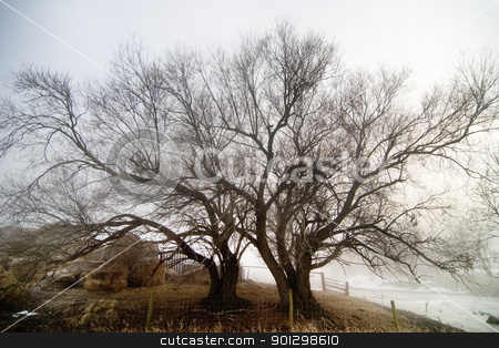 Tree in fog stock photo, Large tree on the Saskatchewan Landscape by Tyler Olson