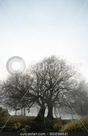 Foggy Tree Row stock photo, Row of trees in the fog. by Tyler Olson