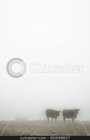 Cows in Fog stock photo, Cows in the prairie winter fog. by Tyler Olson
