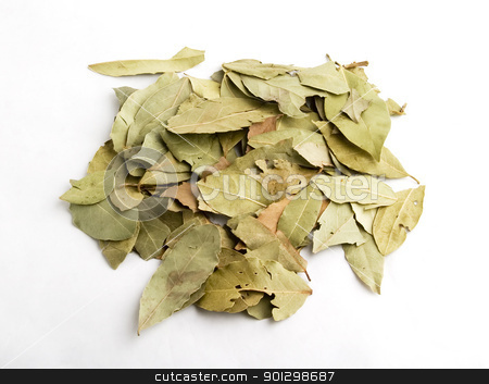Bay Leaves stock photo, Bulk Bay Leaves (Laurus nobilis) by Tyler Olson