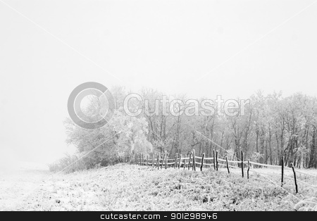Prairie Fog stock photo, Group of trees on a prairie landscape engulfed in fog in black and white by Tyler Olson