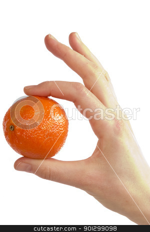 Simply Orange stock photo, A womans hand holding a small christmas orange between her thunb and first finger.  Isolated on white with clipping path. by Tyler Olson