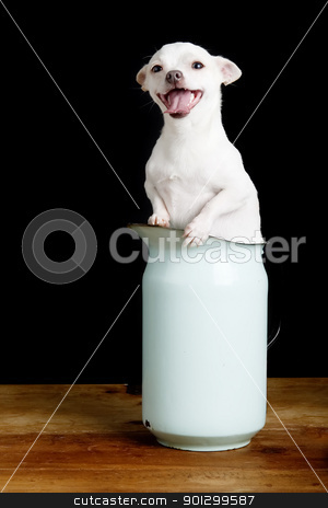 Eager Chihuahua stock photo, A wind blown chihuahua in a pitcher. by Tyler Olson