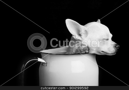 Resting Chihuahua - Black and White stock photo, A chihuahua resting in Black and White by Tyler Olson