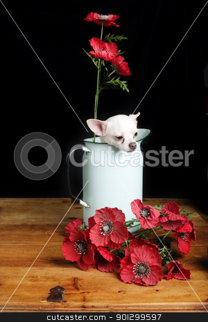 Chihuahua Love stock photo, A chihuahua posing with some flowers. by Tyler Olson