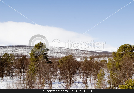 Winter Mountain Landscape stock photo, A winter landscape with a mountain in the background. by Tyler Olson