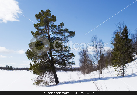 Solitude stock photo, An evergreen tree on a winter landscape. by Tyler Olson