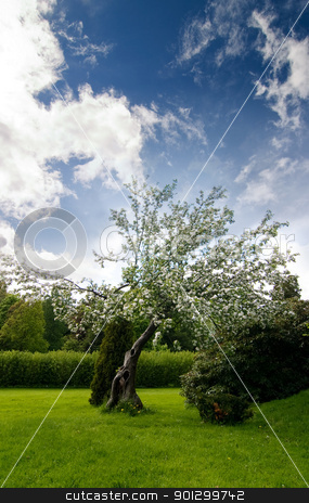 Apple Tree stock photo, An old apple tree with a dramatic sky by Tyler Olson