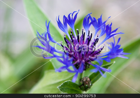 Blue Flower stock photo, A blue flower set against a green background by Tyler Olson