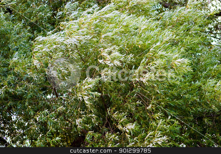 Blowing Tree Background stock photo, A background image of a blowing tree with slight motion blur from wind by Tyler Olson