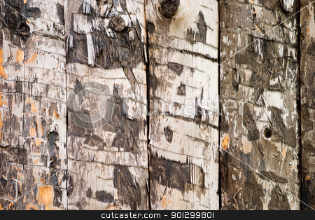 Wood Slab Texture stock photo, A wood slab texture background image by Tyler Olson