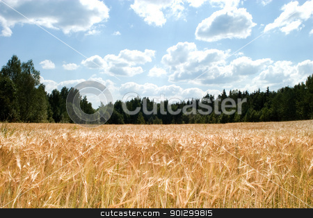 Wheat Field stock photo, A wheat field against a sky and forest by Tyler Olson