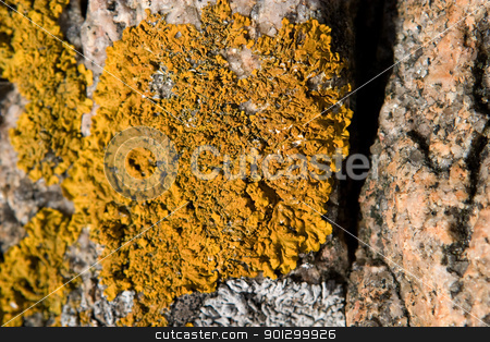 Yellow Fungus Texture stock photo, A yellow fungus on a rock by Tyler Olson