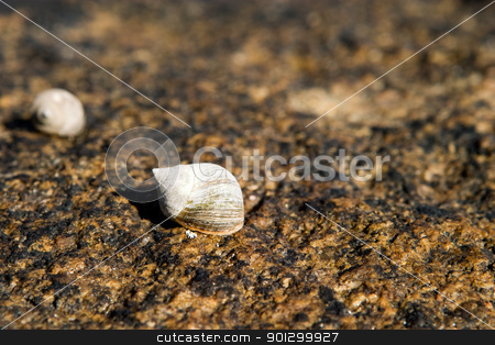 Snail on Rock stock photo, A small snail resting on a rock in it's shell by Tyler Olson