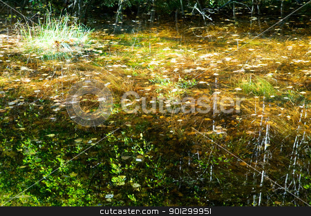 Fall Reflections stock photo, Reflections of yellow, red and orange leaves in a small pool of water in the forest. by Tyler Olson