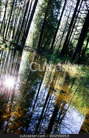 Forest Reflection stock photo, A reflection in the forest with a shallow pool of water. by Tyler Olson