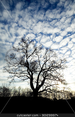 Dramatic Sunrise stock photo, A tree without leaves against a dramatic sky during a sunrise by Tyler Olson