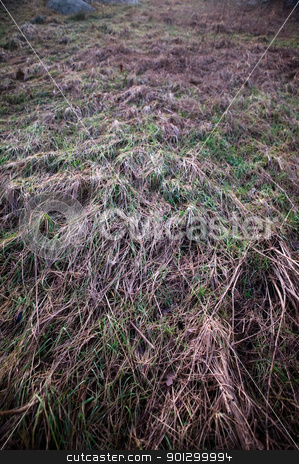 Frozen Grass Background stock photo, A background texture image of frozen grass lyeing down.  The image has a dark spookey feel by Tyler Olson
