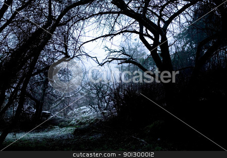 Spooky Path in Fog stock photo, A spooky path overshadowed bya group of dead trees in thick fog. by Tyler Olson