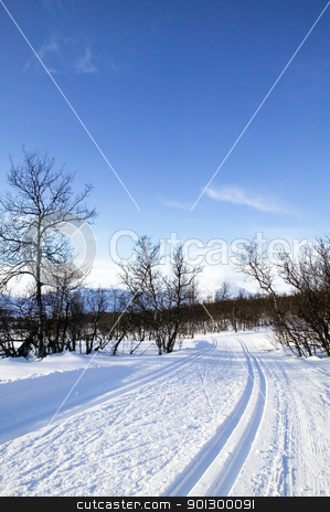 Cross Country Ski Trail stock photo, Cross country ski trails in the mountains of Norway. by Tyler Olson
