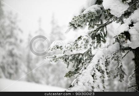 Tree Landscape stock photo, White winter texture and mood image.  A winter setting with lots of snow. by Tyler Olson