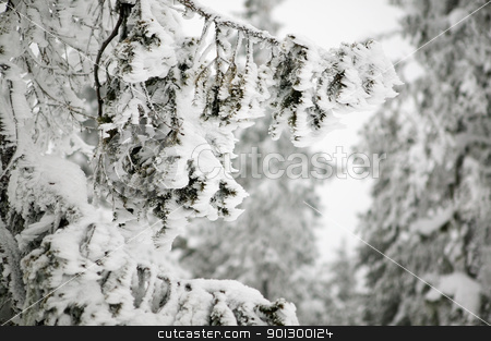 Wind Blown Snow Detail stock photo, White winter texture and mood image.  A winter setting with lots of snow. by Tyler Olson