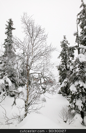 Winter Wonderland stock photo, White winter texture and mood image.  A winter setting with lots of snow. by Tyler Olson