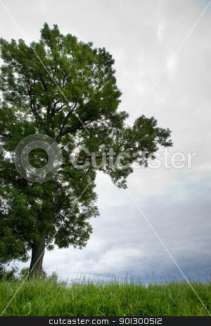 Tree in Horizon stock photo, A tree on a horizon of green grass by Tyler Olson