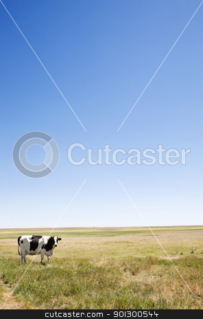 Copy Space Cow stock photo, A cow standing dumbfounded on the prairies with large copy space in the sky and grass by Tyler Olson