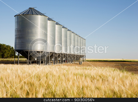 Metal Grain Bin stock photo, Grain bins in the distance with a wheat field in the foreground.  Shallow depth of field is used to bring attention to the grain bins. by Tyler Olson