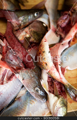 Fish Guts detail stock photo, A detail image of fish freshly filleted by Tyler Olson