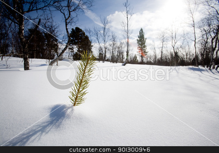 Survival stock photo, A small tree surviving in the snow by Tyler Olson