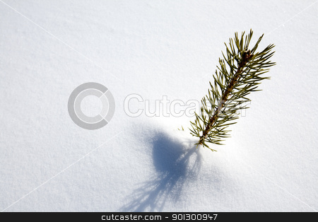 Survival Spruce Tree stock photo, A small tree surviving in the snow by Tyler Olson