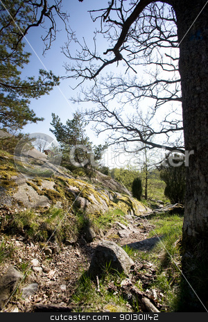 Rock Covered Landscape stock photo, A norwegian landscape with rocks and small trees by Tyler Olson