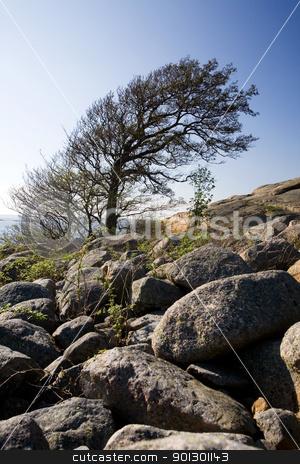 Wind Blown Tree stock photo, A wind blown tree on the ocean coast by Tyler Olson