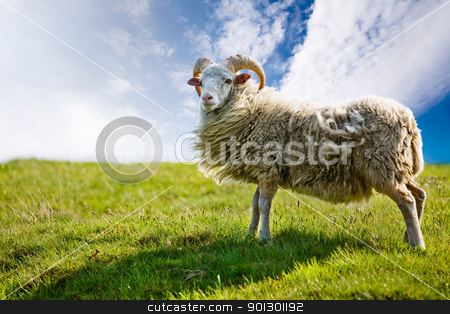 Sheep stock photo, A sheep isolated against a sky by Tyler Olson