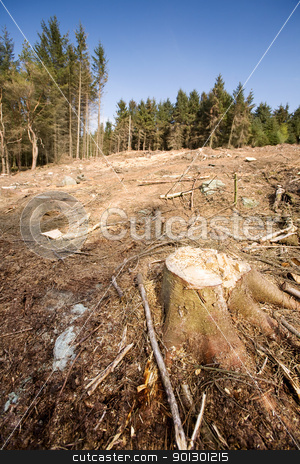 Clearcut Block stock photo, A forest with the trees cut down by Tyler Olson