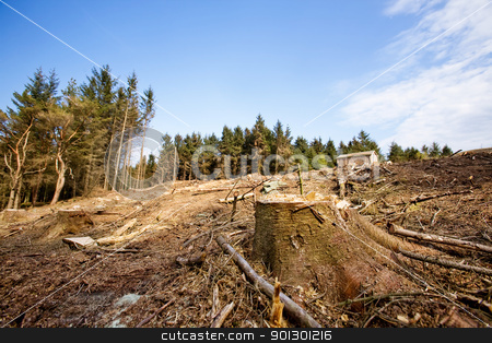 Tree Stump stock photo, A clear cut block with a tree stump in the foreground by Tyler Olson