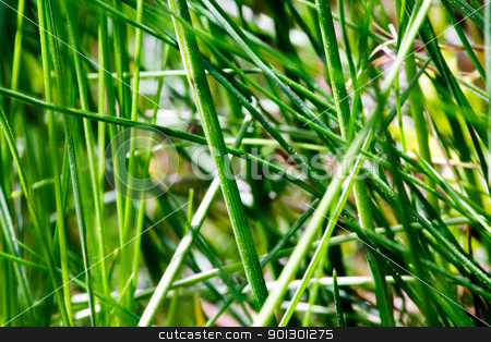 Grass Texture stock photo, Grass texture background image - abstract. by Tyler Olson
