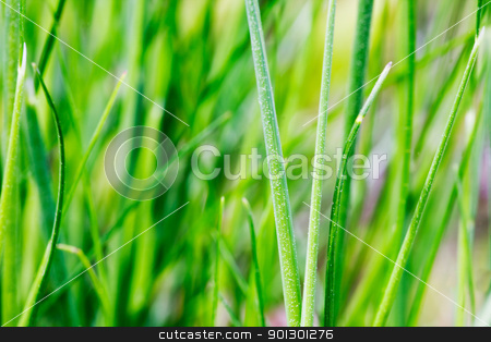 Grass Detail stock photo, An abstract grass background with light motion blur on some of the blades by Tyler Olson